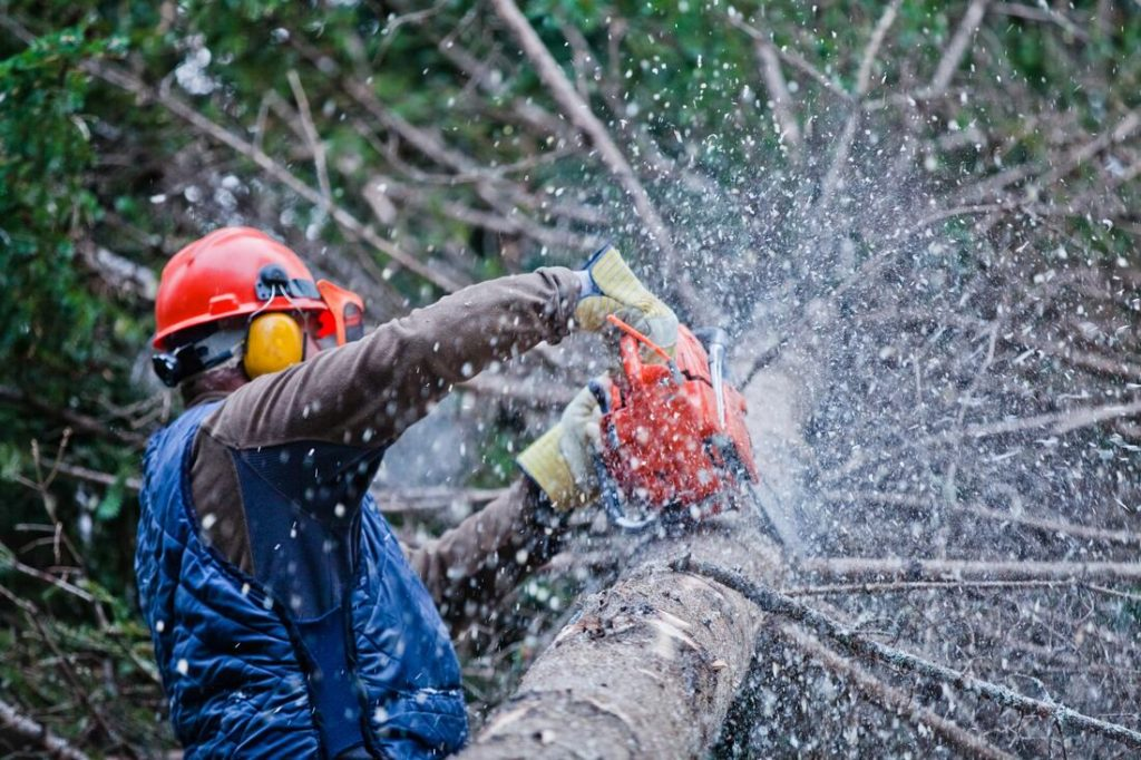 Cardiff-Del Mar CA Tree Trimming and Stump Grinding Services-We Offer Tree Trimming Services, Tree Removal, Tree Pruning, Tree Cutting, Residential and Commercial Tree Trimming Services, Storm Damage, Emergency Tree Removal, Land Clearing, Tree Companies, Tree Care Service, Stump Grinding, and we're the Best Tree Trimming Company Near You Guaranteed!