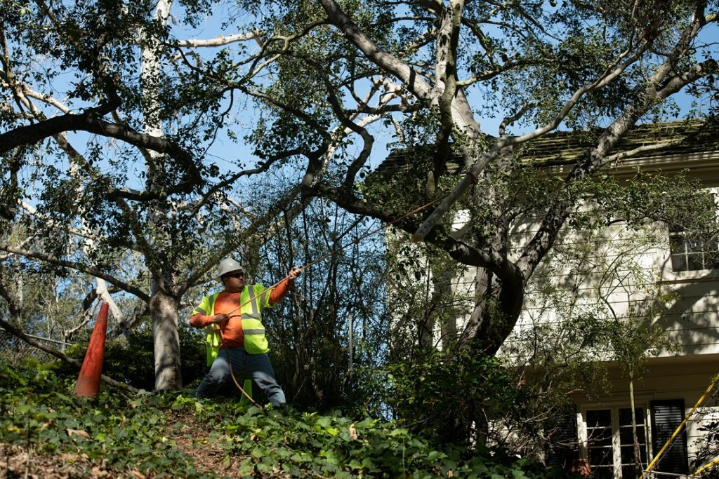 Carmel Valley-Del Mar CA Tree Trimming and Stump Grinding Services-We Offer Tree Trimming Services, Tree Removal, Tree Pruning, Tree Cutting, Residential and Commercial Tree Trimming Services, Storm Damage, Emergency Tree Removal, Land Clearing, Tree Companies, Tree Care Service, Stump Grinding, and we're the Best Tree Trimming Company Near You Guaranteed!