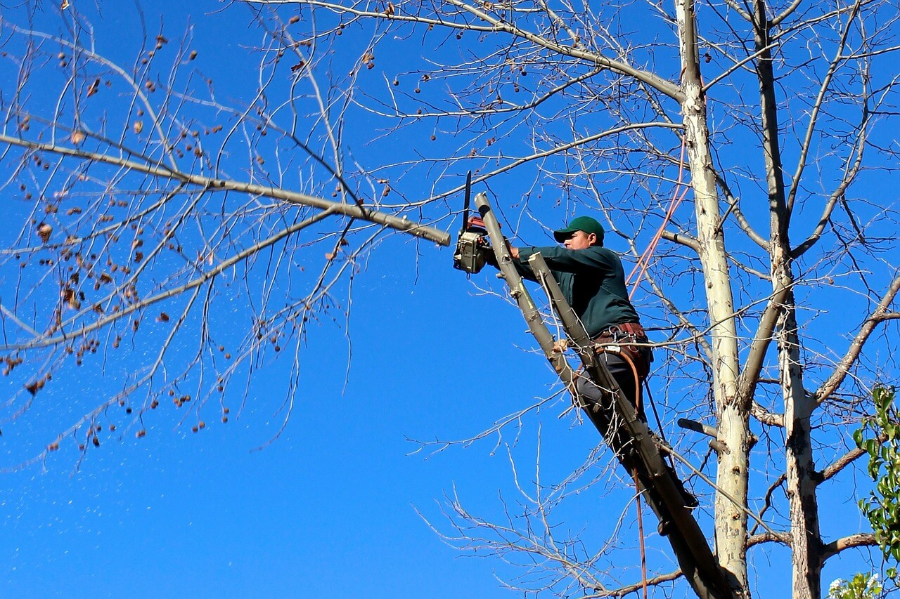Contact Us-Del Mar CA Tree Trimming and Stump Grinding Services-We Offer Tree Trimming Services, Tree Removal, Tree Pruning, Tree Cutting, Residential and Commercial Tree Trimming Services, Storm Damage, Emergency Tree Removal, Land Clearing, Tree Companies, Tree Care Service, Stump Grinding, and we're the Best Tree Trimming Company Near You Guaranteed!