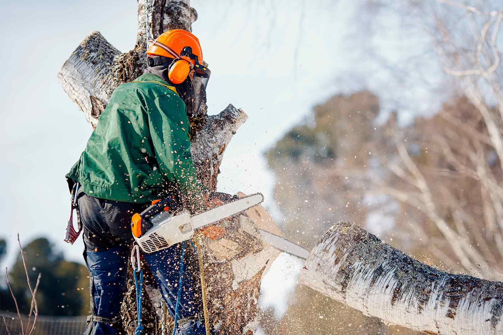 Del Mar CA Tree Trimming and Stump Grinding Services Home Page Image-We Offer Tree Trimming Services, Tree Removal, Tree Pruning, Tree Cutting, Residential and Commercial Tree Trimming Services, Storm Damage, Emergency Tree Removal, Land Clearing, Tree Companies, Tree Care Service, Stump Grinding, and we're the Best Tree Trimming Company Near You Guaranteed!