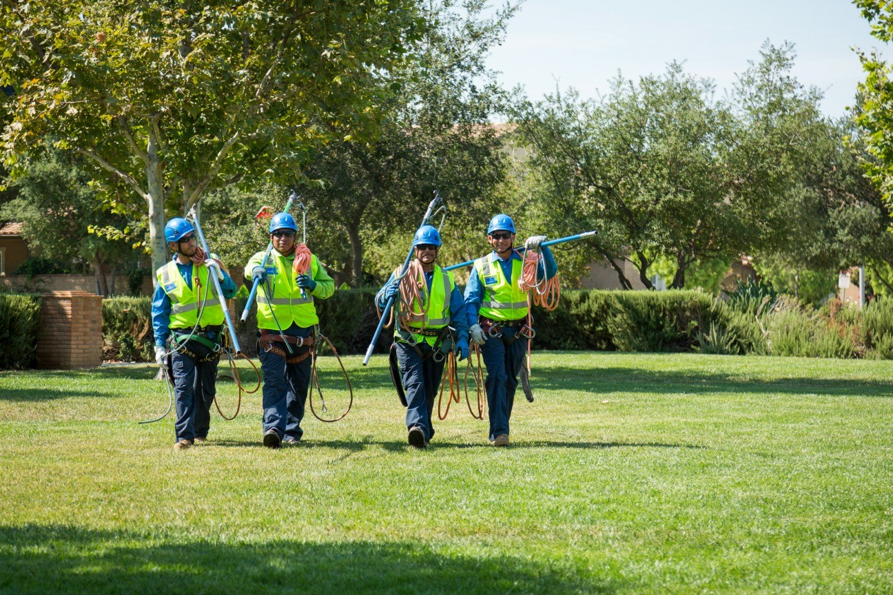 North City-Del Mar CA Tree Trimming and Stump Grinding Services-We Offer Tree Trimming Services, Tree Removal, Tree Pruning, Tree Cutting, Residential and Commercial Tree Trimming Services, Storm Damage, Emergency Tree Removal, Land Clearing, Tree Companies, Tree Care Service, Stump Grinding, and we're the Best Tree Trimming Company Near You Guaranteed!