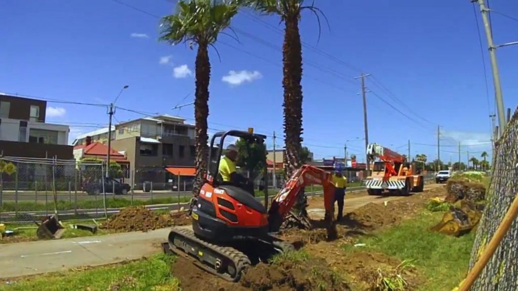 Palm Tree Removal-Del Mar CA Tree Trimming and Stump Grinding Services-We Offer Tree Trimming Services, Tree Removal, Tree Pruning, Tree Cutting, Residential and Commercial Tree Trimming Services, Storm Damage, Emergency Tree Removal, Land Clearing, Tree Companies, Tree Care Service, Stump Grinding, and we're the Best Tree Trimming Company Near You Guaranteed!