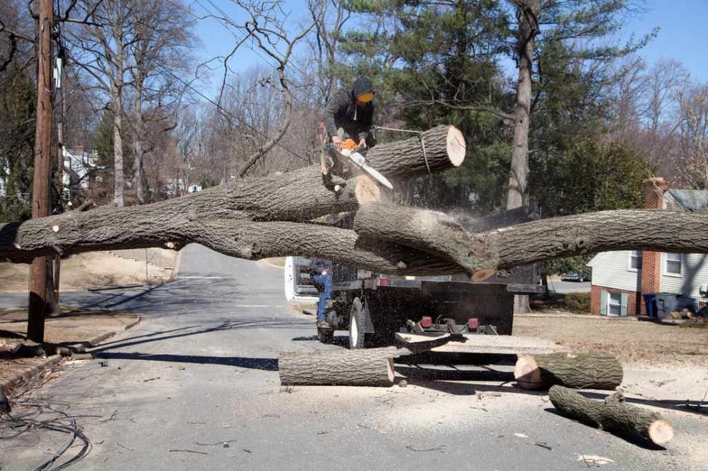 Residential Tree Services-Del Mar CA Tree Trimming and Stump Grinding Services-We Offer Tree Trimming Services, Tree Removal, Tree Pruning, Tree Cutting, Residential and Commercial Tree Trimming Services, Storm Damage, Emergency Tree Removal, Land Clearing, Tree Companies, Tree Care Service, Stump Grinding, and we're the Best Tree Trimming Company Near You Guaranteed!