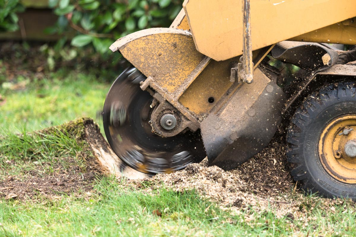 Stump Grinding-Del Mar CA Tree Trimming and Stump Grinding Services-We Offer Tree Trimming Services, Tree Removal, Tree Pruning, Tree Cutting, Residential and Commercial Tree Trimming Services, Storm Damage, Emergency Tree Removal, Land Clearing, Tree Companies, Tree Care Service, Stump Grinding, and we're the Best Tree Trimming Company Near You Guaranteed!