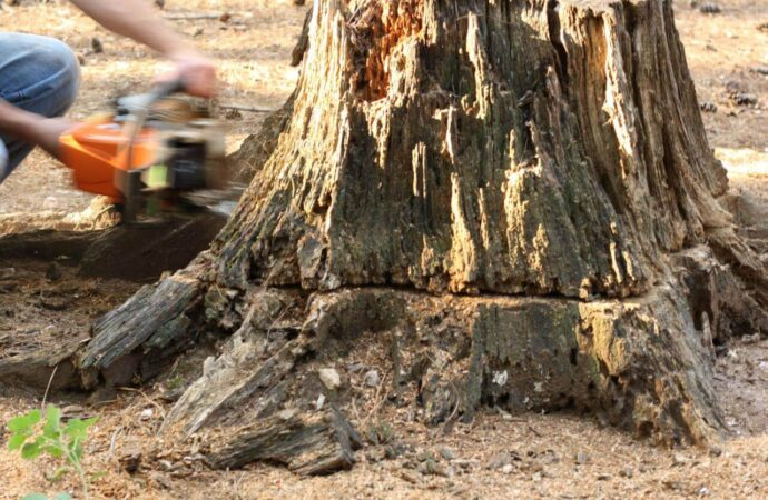 Stump Removal-Del Mar CA Tree Trimming and Stump Grinding Services-We Offer Tree Trimming Services, Tree Removal, Tree Pruning, Tree Cutting, Residential and Commercial Tree Trimming Services, Storm Damage, Emergency Tree Removal, Land Clearing, Tree Companies, Tree Care Service, Stump Grinding, and we're the Best Tree Trimming Company Near You Guaranteed!