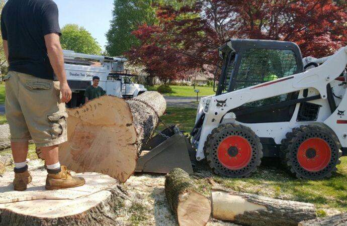 Torrey Pines-Del Mar CA Tree Trimming and Stump Grinding Services-We Offer Tree Trimming Services, Tree Removal, Tree Pruning, Tree Cutting, Residential and Commercial Tree Trimming Services, Storm Damage, Emergency Tree Removal, Land Clearing, Tree Companies, Tree Care Service, Stump Grinding, and we're the Best Tree Trimming Company Near You Guaranteed!