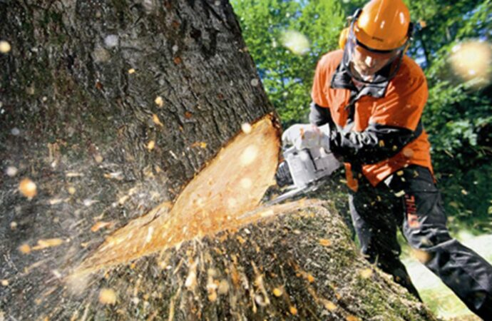Tree Cutting-Del Mar CA Tree Trimming and Stump Grinding Services-We Offer Tree Trimming Services, Tree Removal, Tree Pruning, Tree Cutting, Residential and Commercial Tree Trimming Services, Storm Damage, Emergency Tree Removal, Land Clearing, Tree Companies, Tree Care Service, Stump Grinding, and we're the Best Tree Trimming Company Near You Guaranteed!