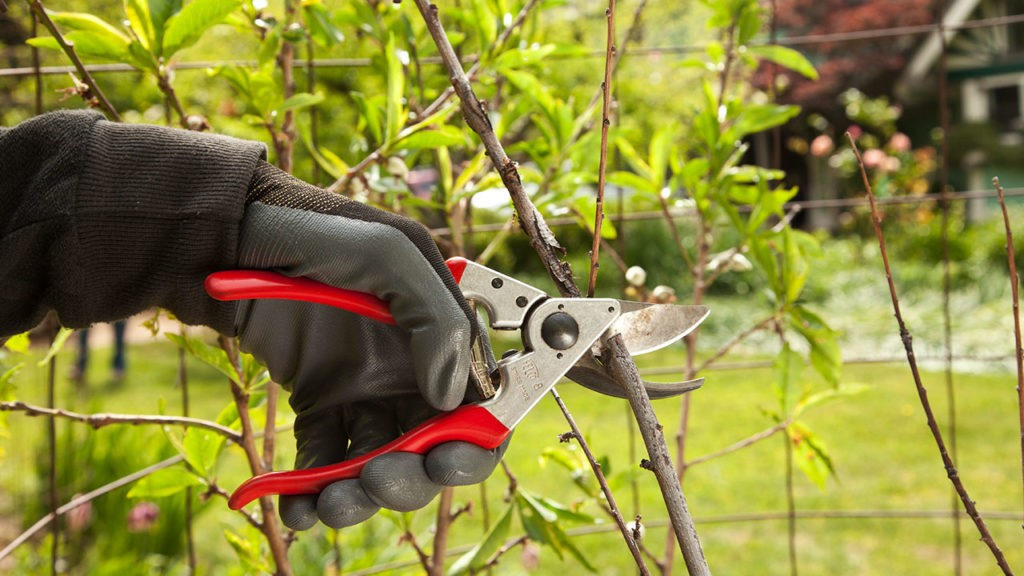 Tree Pruning-Del Mar CA Tree Trimming and Stump Grinding Services-We Offer Tree Trimming Services, Tree Removal, Tree Pruning, Tree Cutting, Residential and Commercial Tree Trimming Services, Storm Damage, Emergency Tree Removal, Land Clearing, Tree Companies, Tree Care Service, Stump Grinding, and we're the Best Tree Trimming Company Near You Guaranteed!