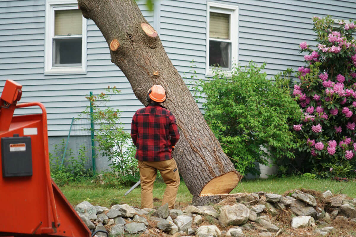 Tree Removal-Del Mar CA Tree Trimming and Stump Grinding Services-We Offer Tree Trimming Services, Tree Removal, Tree Pruning, Tree Cutting, Residential and Commercial Tree Trimming Services, Storm Damage, Emergency Tree Removal, Land Clearing, Tree Companies, Tree Care Service, Stump Grinding, and we're the Best Tree Trimming Company Near You Guaranteed!